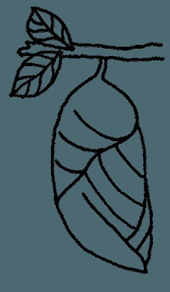 Crisálida Mariposa Libro Para