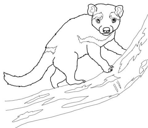 Dibujo De Demonio De Tasmania Sobre Una Rama Para Colorear