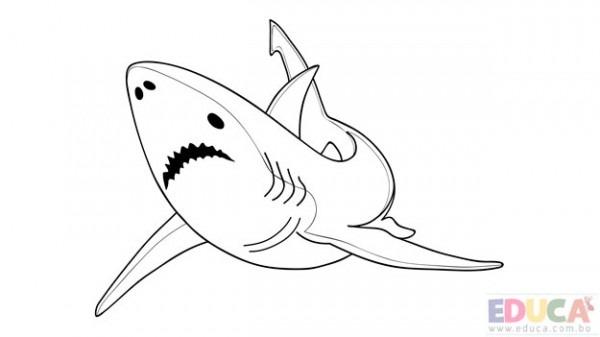 Dibujo De Tiburon Blanco Para Colorear