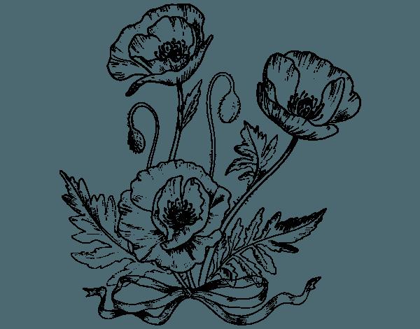 Dibujo De Unas Amapolas Para Colorear, Imprimir O Descargar