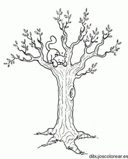 Dibujo De Un Gato Sobre Un árbol