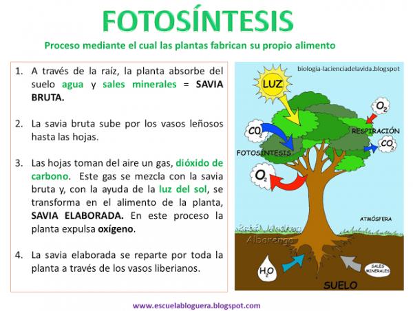Blog De 4ºa   Así Hacen La Nutrición Las Plantas