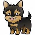 Dibujos Para Colorear De Perros Yorkshire