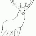 Imagenes De Animales Reales Para Colorear