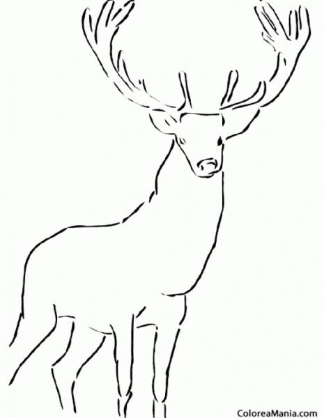 Colorear Ciervo Real (animales Del Bosque), Dibujo Para Colorear