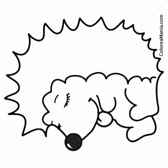 Colorear Erizo Soñoliento (animales Del Bosque), Dibujo Para