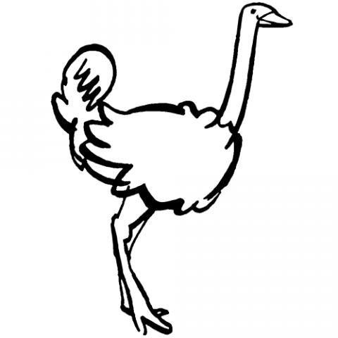 Avestruz  Dibujos Para Colorear