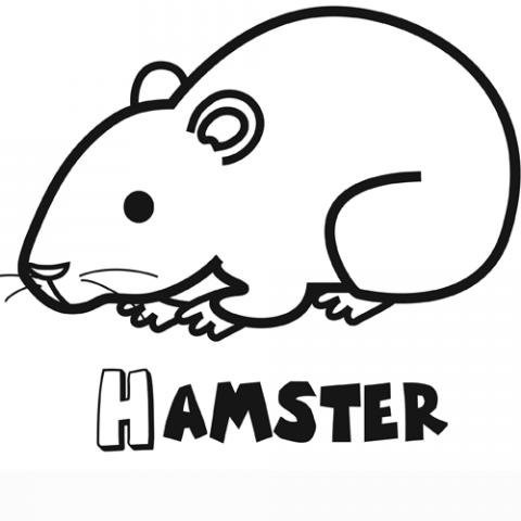 Dibujo Gratis De Un Hámster Para Colorear  Dibujos De Mascotas