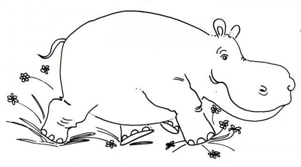 Hipopotamo Para Colorear