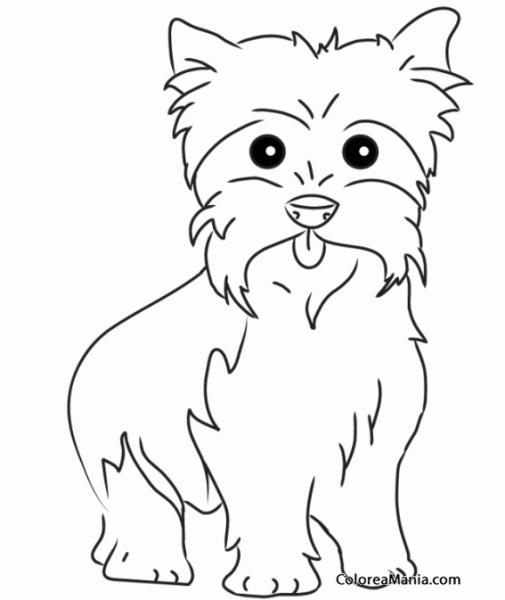 Colorear Perro Yorkshire Terrier O Yorkie 4 (animales Domésticos