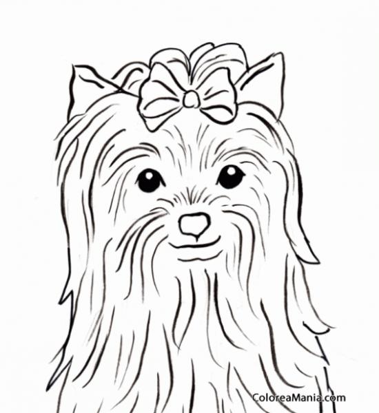 Colorear Cabeza Perro Yorkshire (animales Domésticos), Dibujo Para