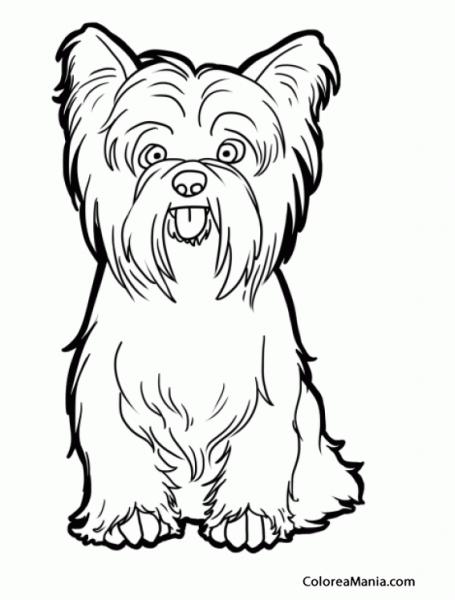 Colorear Perro Yorkshire Terrier O Yorkie Sentado (animales