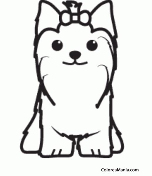 Colorear Silueta Perro Yorkshire Terrier 2 (animales Domésticos
