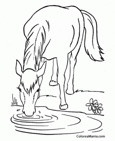 Colorear Caballo Bebiendo En Charca (animales Domésticos), Dibujo
