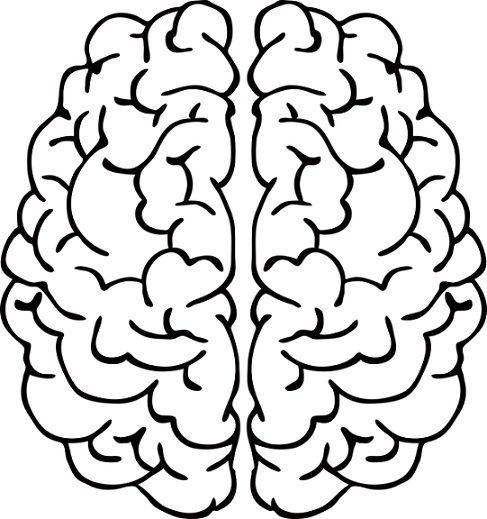 El Cerebro Para Colorear Para Niños