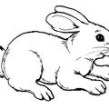 Imagenes Para Colorear De Un Conejo
