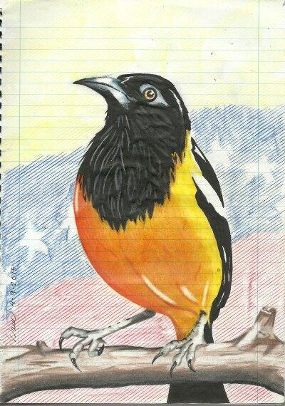 Turpial Dibujo Facil   dibujo de turpial para colorear
