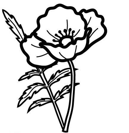 Laminas De Flores  Amapolas Para Pintar