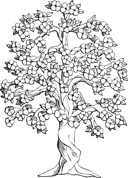 Dibujo Del Arbol Nacional El Araguaney