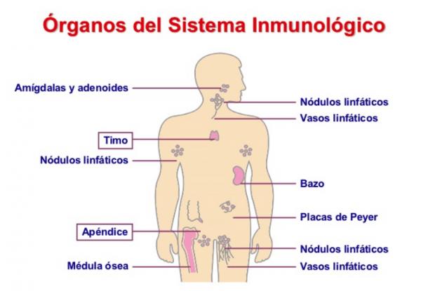 Imagenes Del Sistema Inmunologico Para Colorear