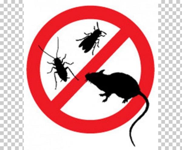 Control De Plagas De Gatos Alimañas Control Integrado De Plagas