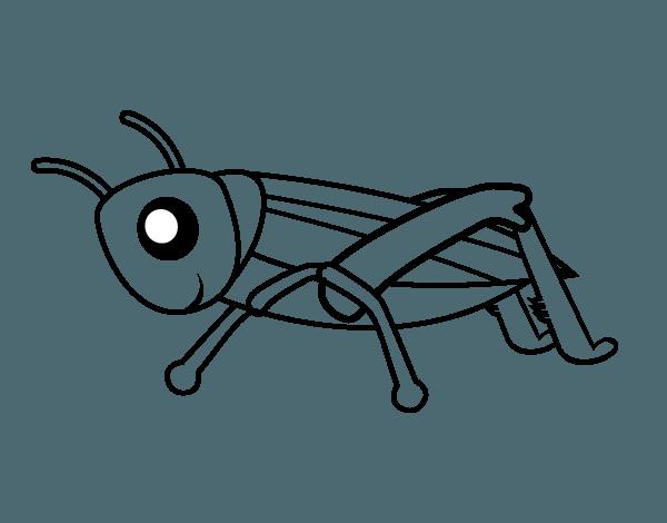Dibujo De Saltamontes Joven Para Colorear