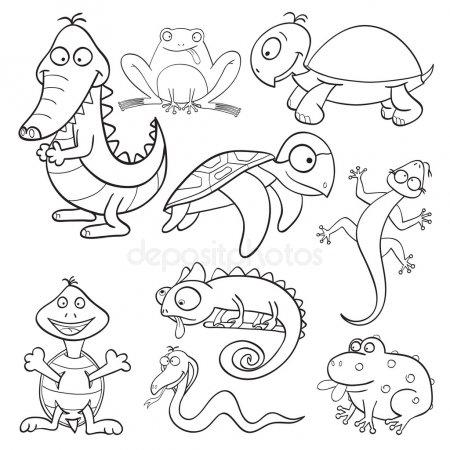 ᐈ Anfibios Para Imprimir Imágenes De Stock, Fotos Anfibios