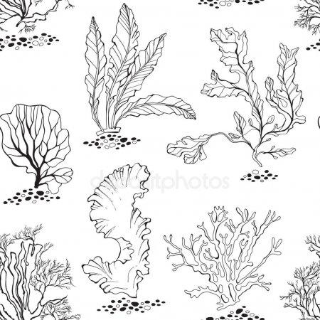 ᐈ Flora Marina Imágenes De Stock, Dibujos De Flora Marina