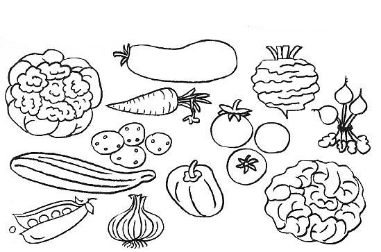 Dibujos De Vegetales Para Imprimir Y Colorear  Verduras Y