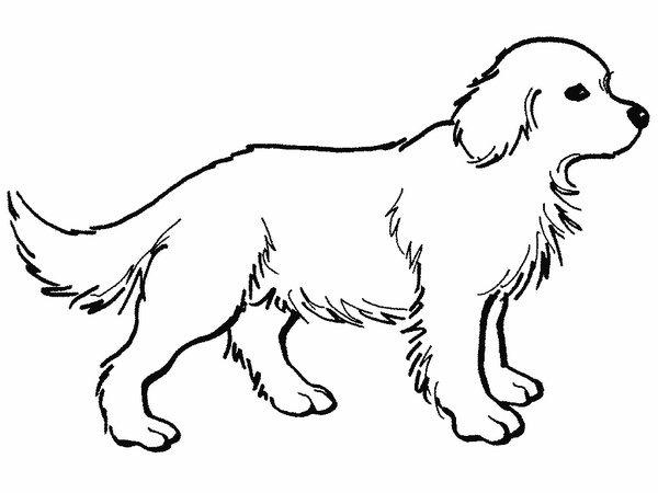 302 Dibujos De Perros Para Colorear