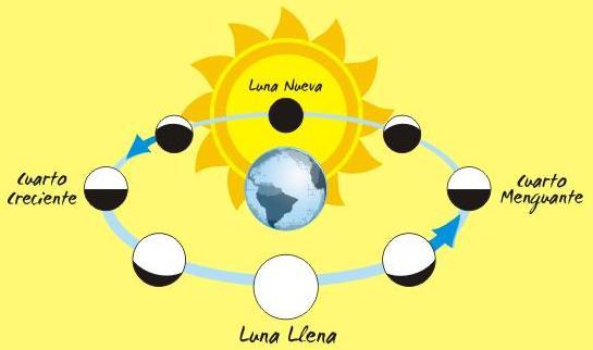 Cultura Miscelaneas Imagenes Dibujos  Dibujos  Fases De La Luna O