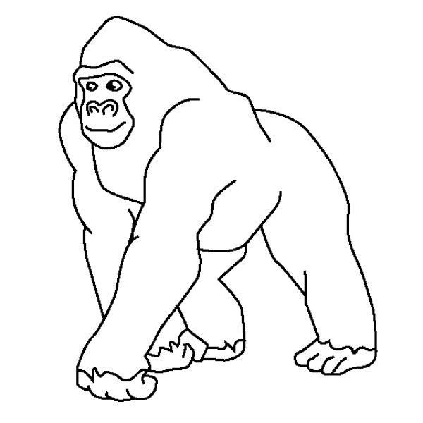 Imágenes De Gorilas Para Colorear    Imágenes Y Fotos