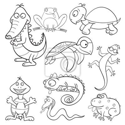 Libro Para Colorear Con Reptiles Y Anfibios Pinturas Para La Pared