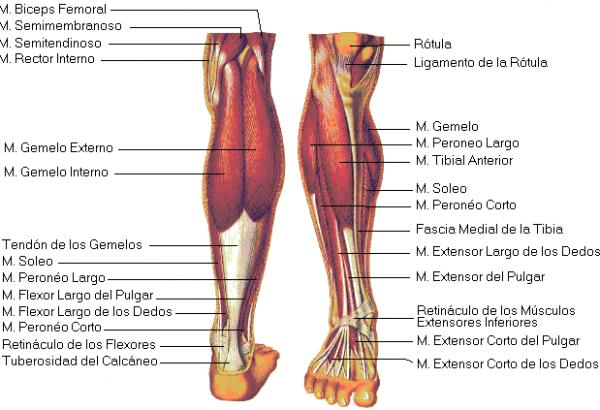 √ Dibujos Imagenes Biologia Sistema Aparato  Dibujos De