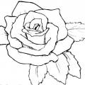Dibujos A Lapiz Para Colorear