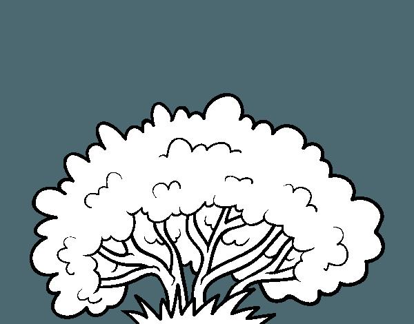 Dibujo De Un Arbusto Para Colorear