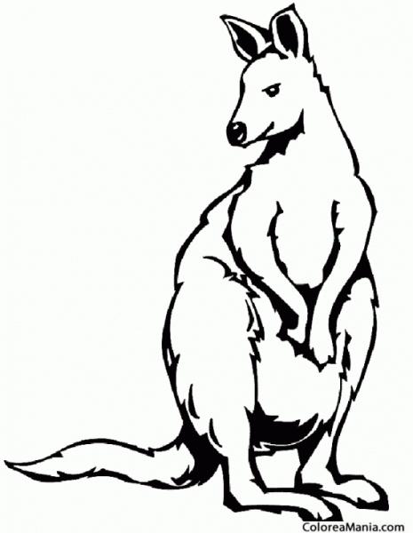 Colorear Canguro Pelo Largo (animales De La Sabana), Dibujo Para