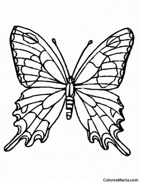 Colorear Mariposa Lobito Listado (insectos), Dibujo Para Colorear