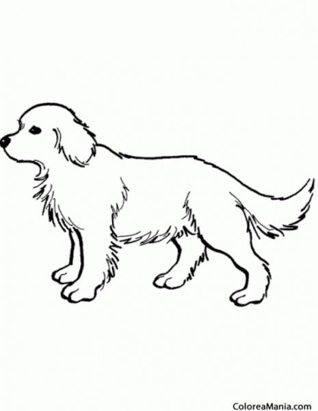 Colorear Perro Pelo Largo (animales Domésticos), Dibujo Para