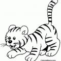 Animales De La Selva Para Colorear E Imprimir
