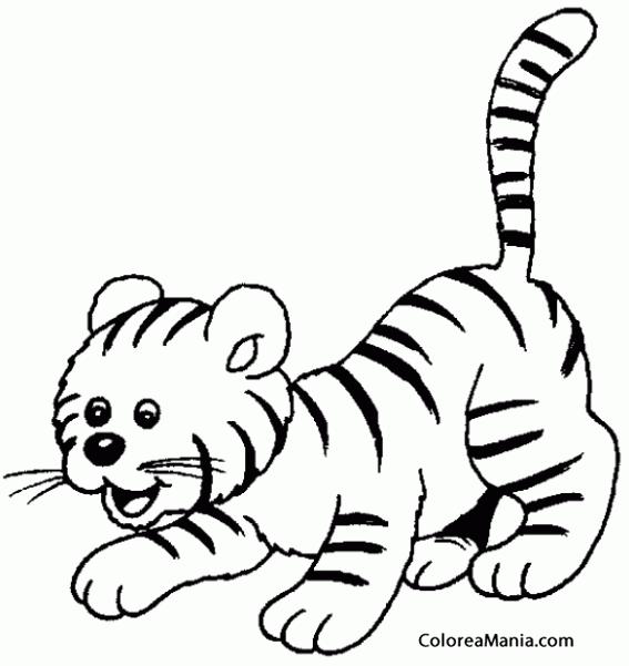 Colorear Cachorro De Tigre (animales De La Selva), Dibujo Para