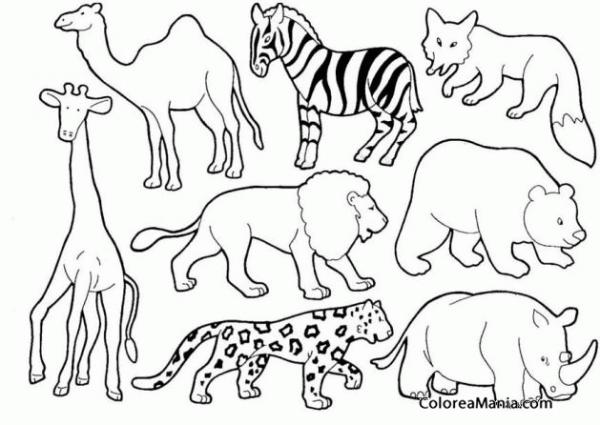 Colorear Animales Salvajes 2 (animales De La Selva), Dibujo Para