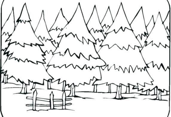 Bosque Tropical Para Colorear Para S Ecosistema Bosque Tropical