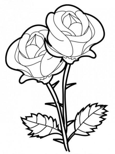 Dibujos De Plantas Ornamentales Para Colorear