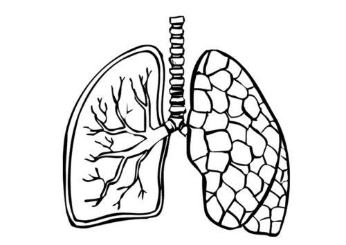 Dibujo Para Colorear Pulmones En 2019