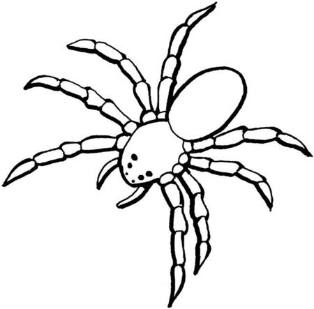 Como Dibujar Arañas Faciles