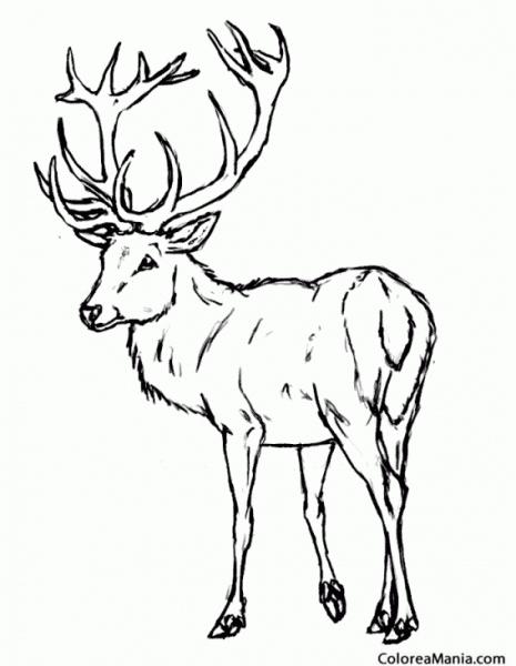 Colorear Ciervo De Gran Cornamenta (animales Del Bosque), Dibujo