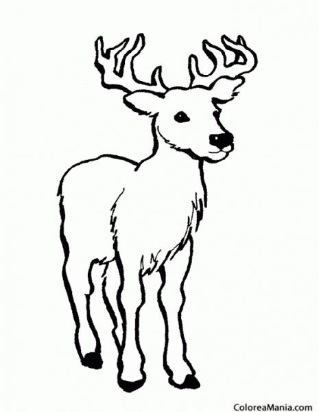 Colorear Ciervo  Venado De Agua (animales Del Bosque), Dibujo Para