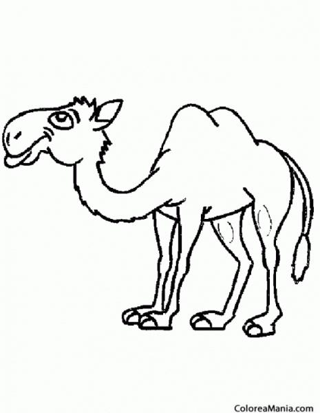 Colorear Camello De Desierto (animales Del Desierto), Dibujo Para