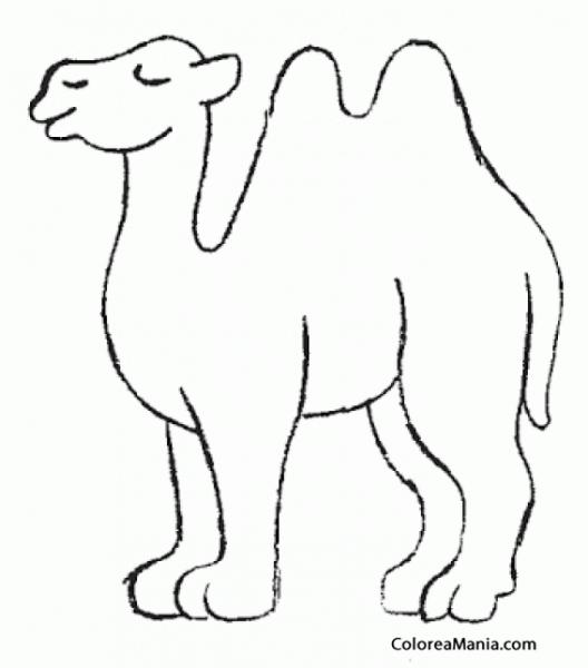 Colorear Camello Patas Gordas (animales Del Desierto), Dibujo Para